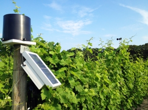The weather recording station (left) and anemometer (right, in vines).